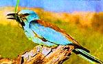 Южно-Казахстанская область. Природа Казахстана