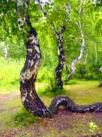 Kokshetau State National Nature Park. Pictures of Kazakhstan nature