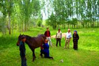 Сайрам-Угамский Национальный Парк. Природа Казахстана