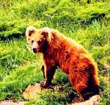 Aksu-Zhabagly Nature Reserve. Kazakhstan nature