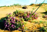Kulujun Nature Reserve. Kazakhstan nature