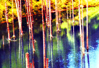 Kaindy Lake. Kazakhstan nature